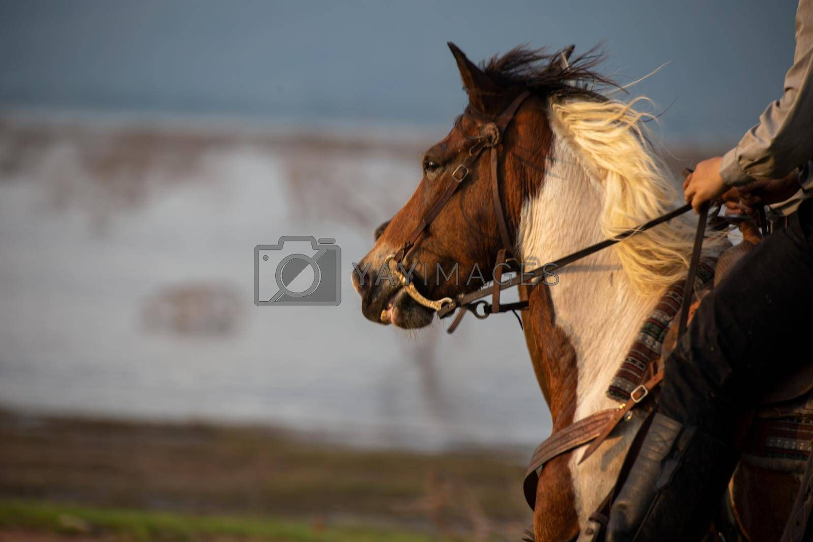 Royalty free image of cowboy on horseback against a beautiful sunset, cowboy and horse at first light,mountain, river and lifestyle with natural light background  by chuanchai