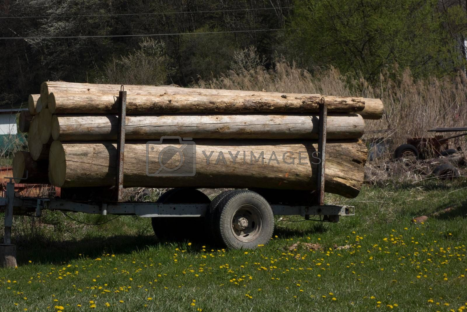 wood transport and logistics in forestry and the forest management