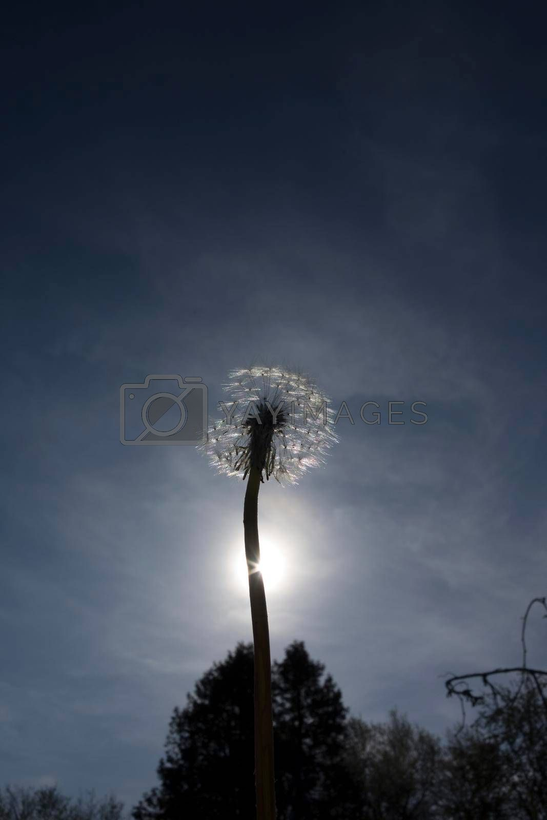 light as life force in nature, sunshine for energy and vitality