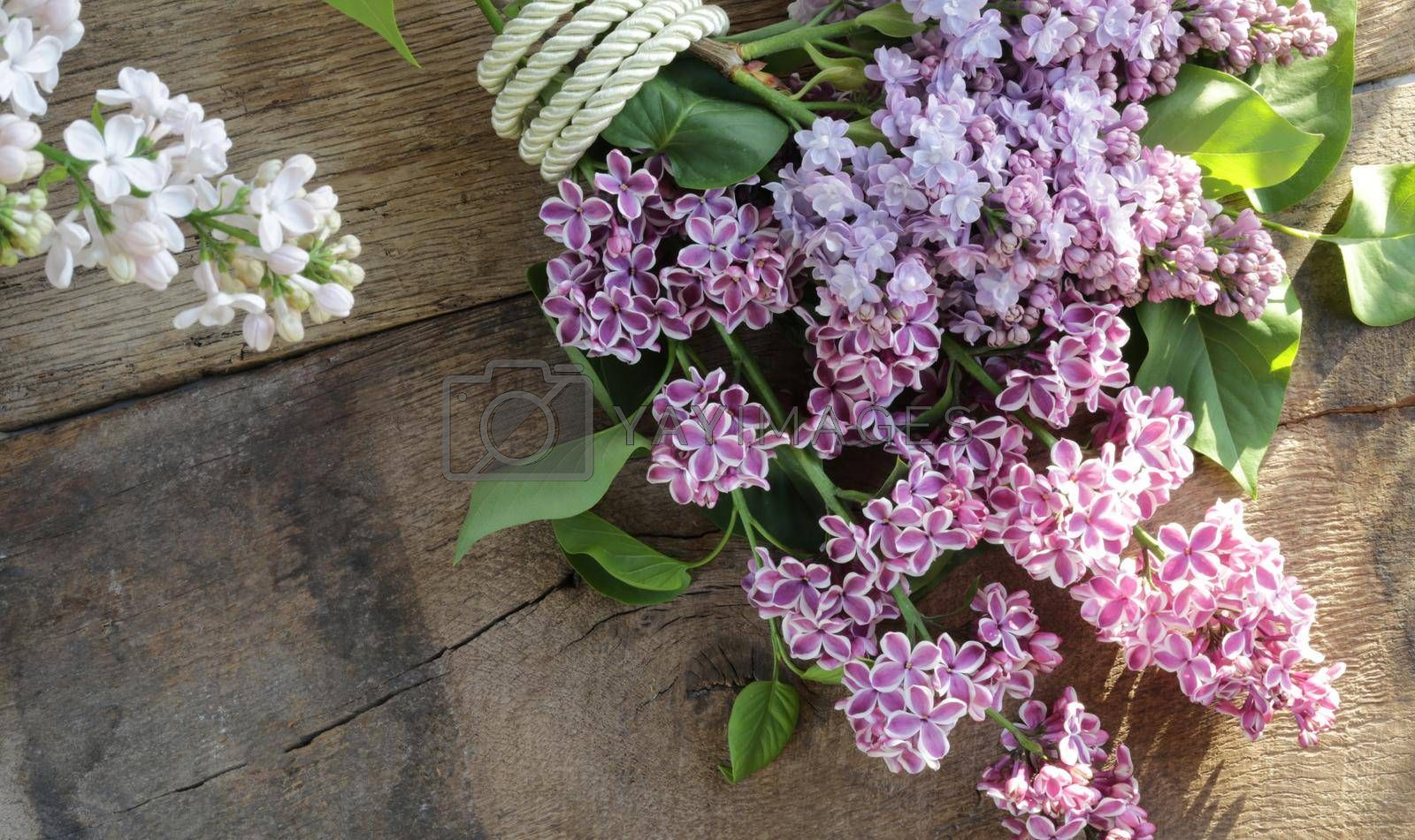 Spring fresh flower background. Lilac flowers on rustic grunge old wood background. Morning light, flat lay