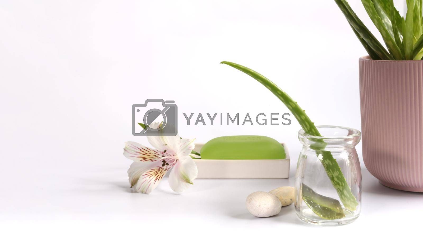 Aloe Vera leaf, sliced aloe vera plant with spa background over white