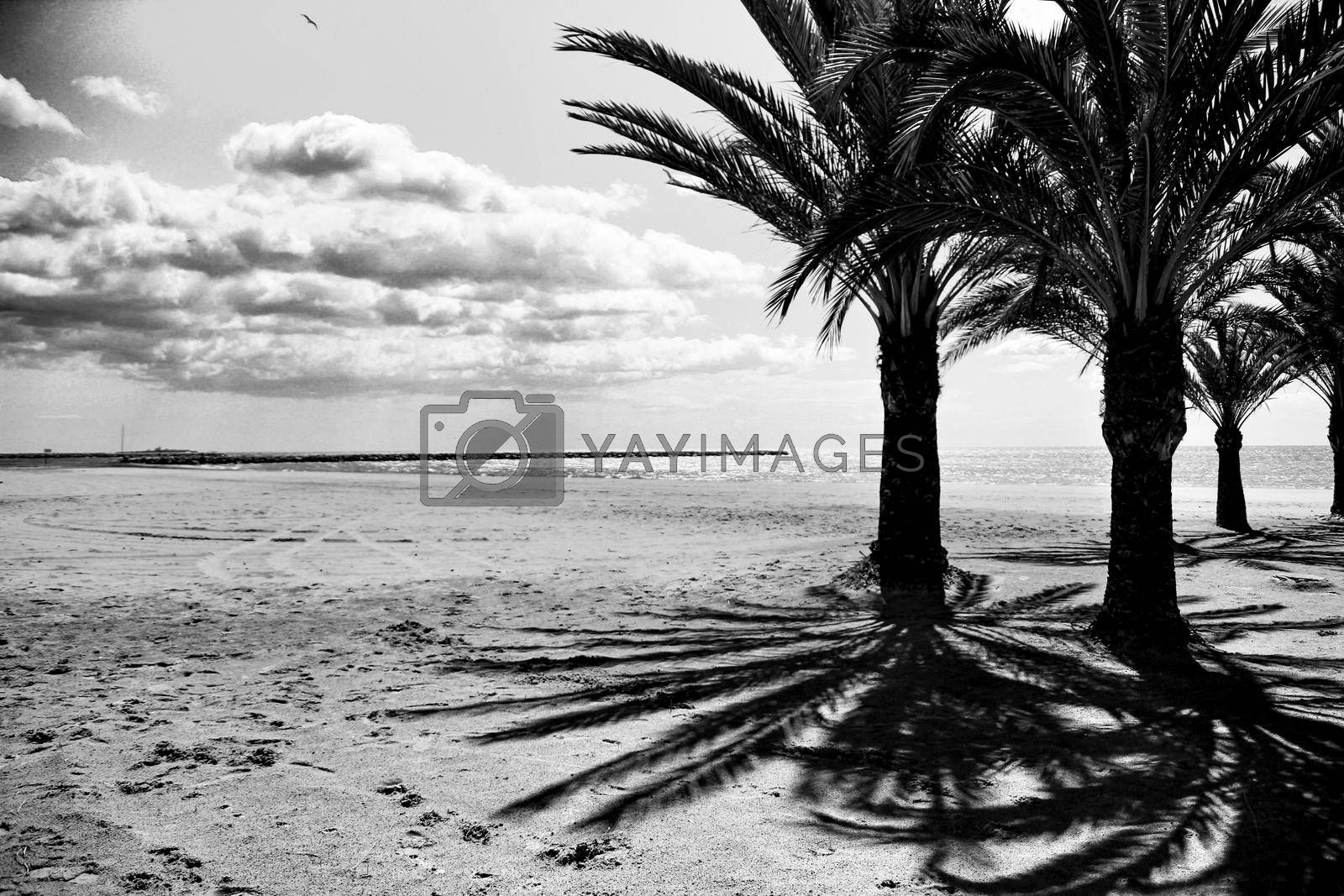 Oasis of palm trees on the beach in Santa Pola village, southern Spain in a cloudy day of Spring