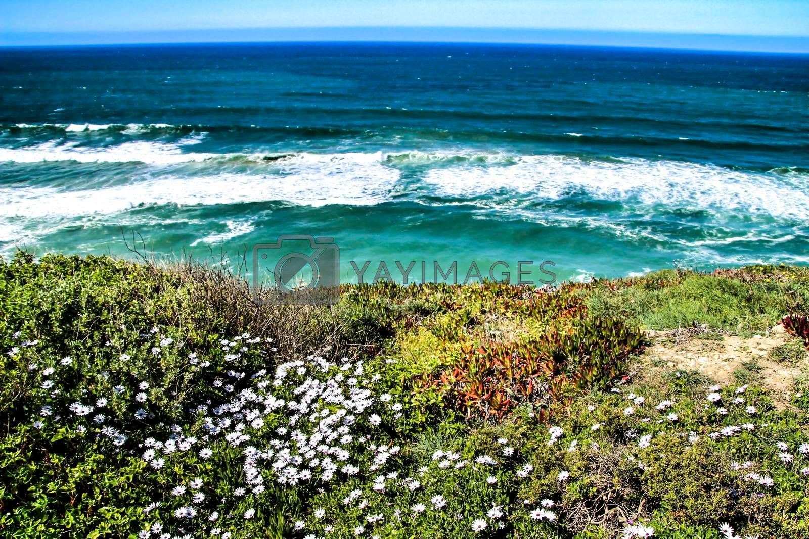 Cliff edge looking at the Atlantic Ocean and covered with vegetation and beautiful flowers in Azenhas do Mar in Lisbon, Portugal
