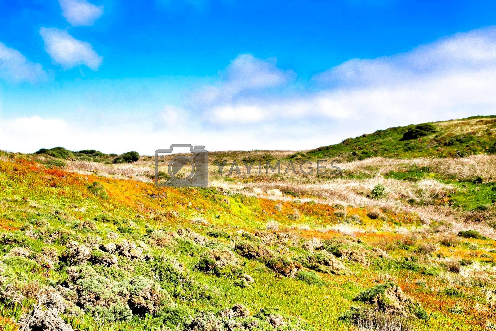 Beautiful landscape of carpobrotus Edulis plants and green vegetation in the mountain of Cabo da Roca in Portugal