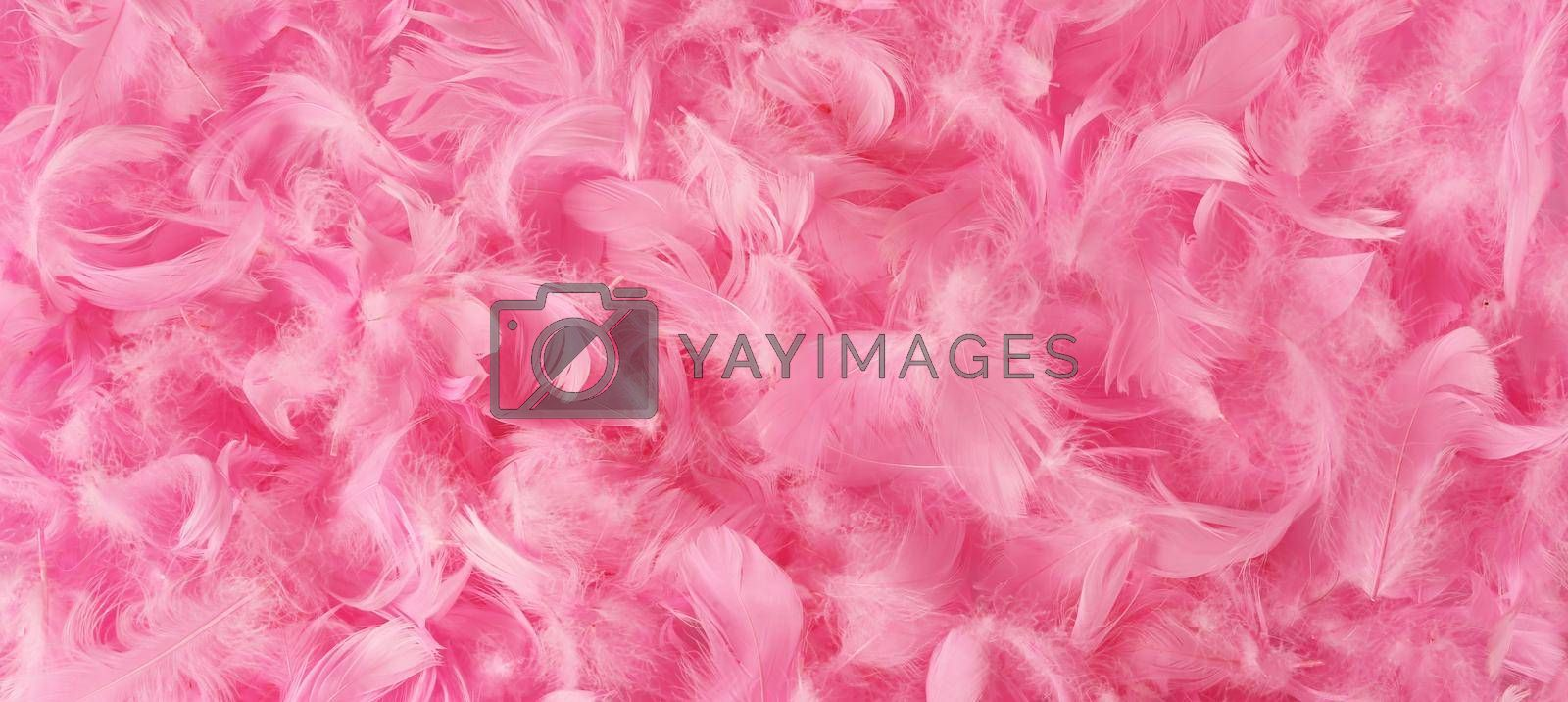 Background with beautiful pink feathers. Pastel pink feather decorations. Horizontal flat lay. Copy space
