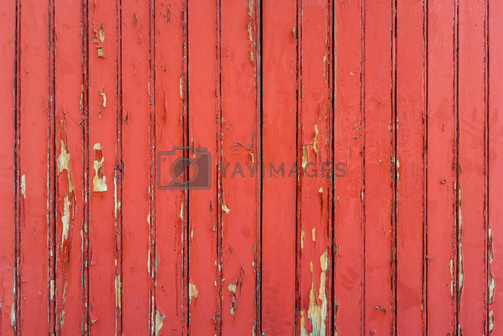 Red weathered wood wall background, peeling paint texture