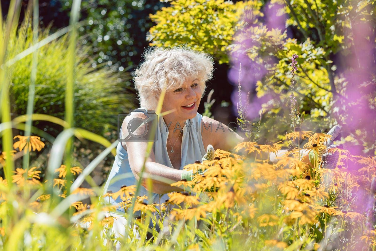 Royalty free image of Senior woman with an active lifestyle enjoying retirement with garden work by Kzenon