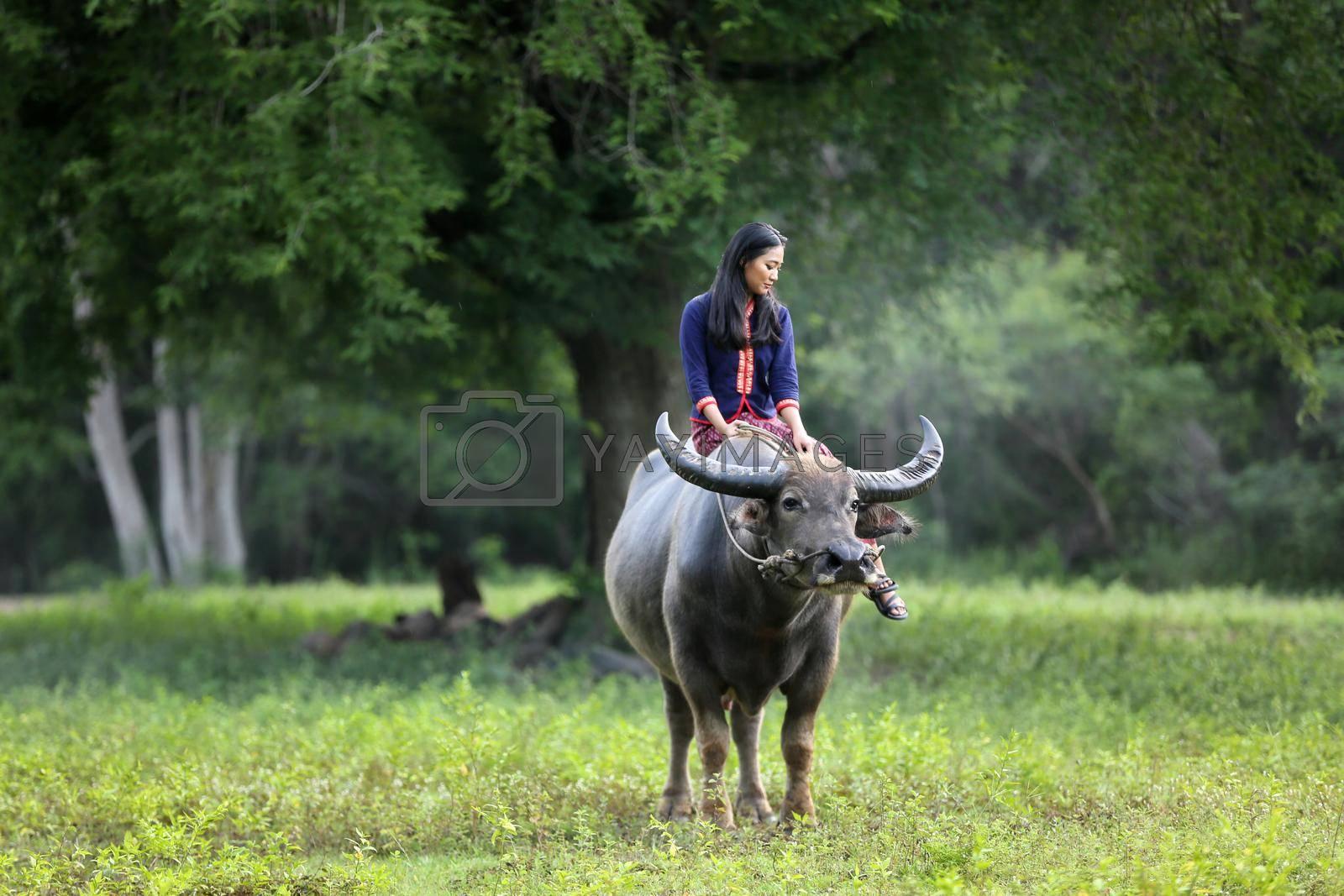 Asian woman Thai farmer sitting on a buffalo in the field