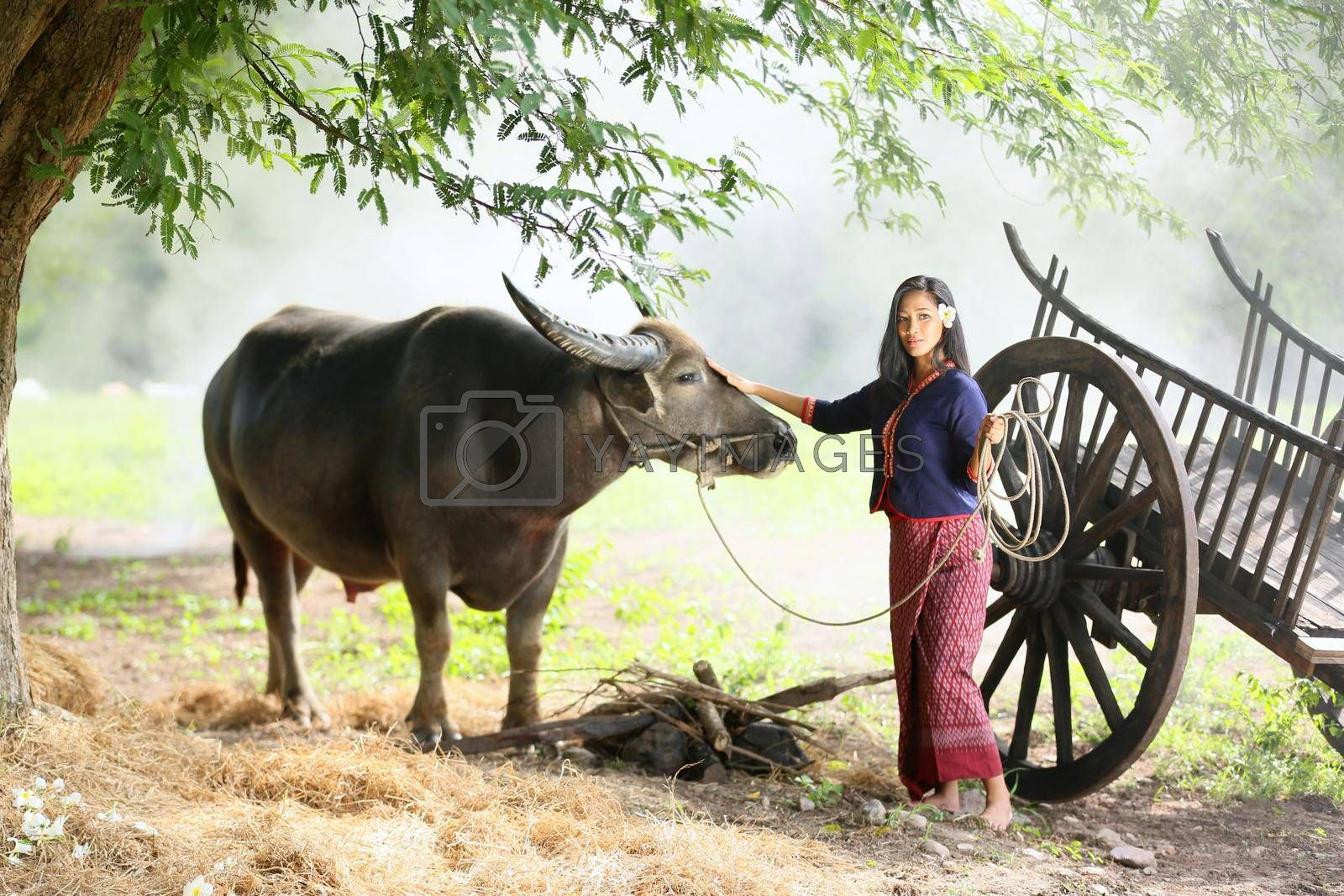 Asian girl in the countryside, walking back home with her Buffalo