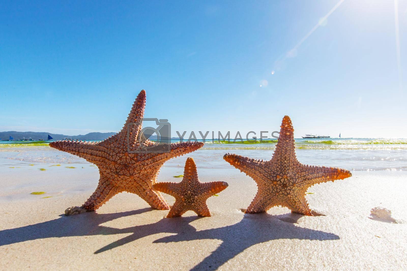 Royalty free image of Three Starfish on sandy beach by Yellowj