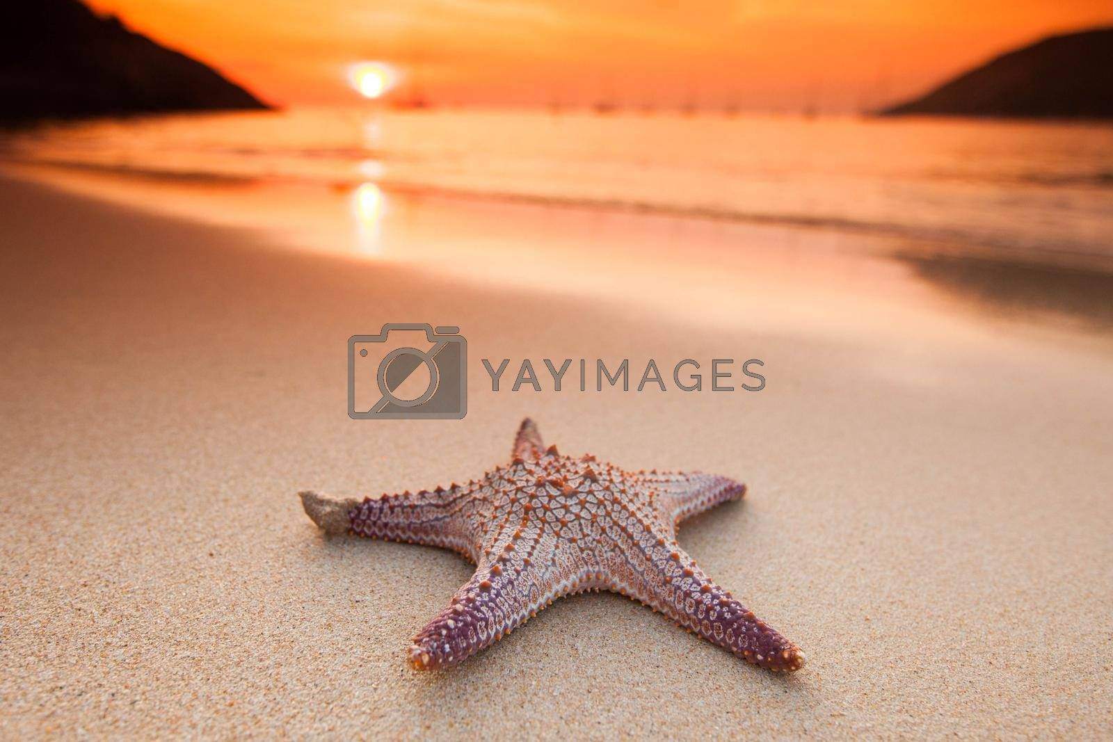 Royalty free image of Starfish on beach at sunset by Yellowj