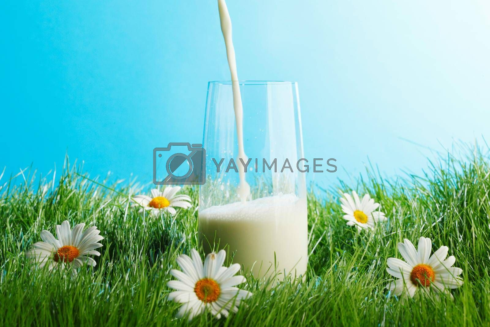 Royalty free image of Pouring milk in a glass by Yellowj