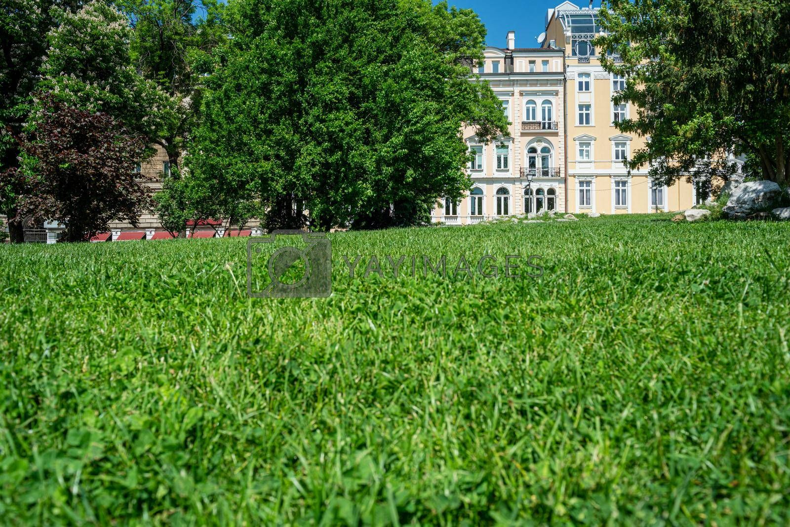 Royalty free image of Grass Green Clovers Park Urban Europe Bulgaria Sunny Day by vilevi
