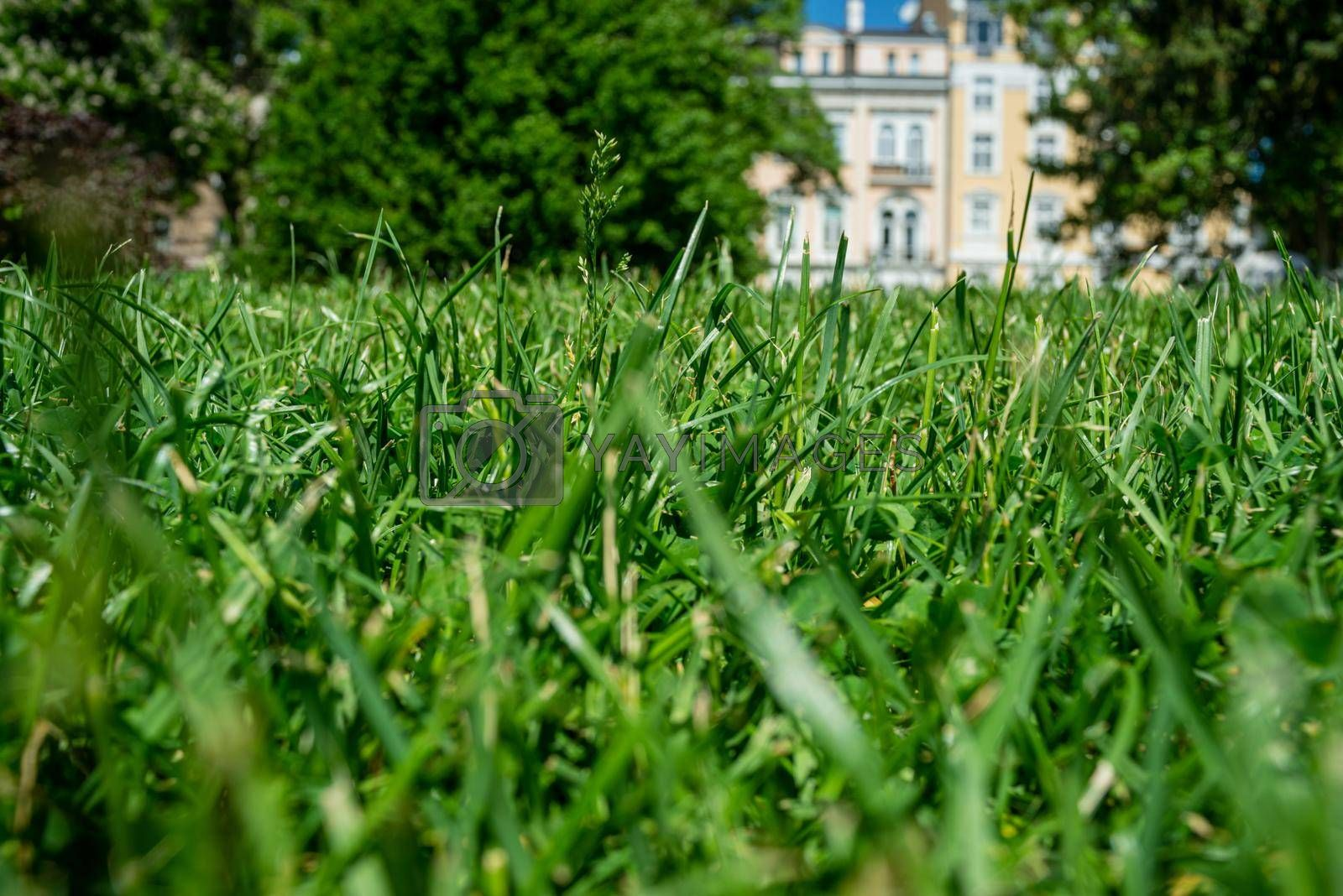 Royalty free image of Grass Green Park Urban Europe Bulgaria Sunny Day by vilevi