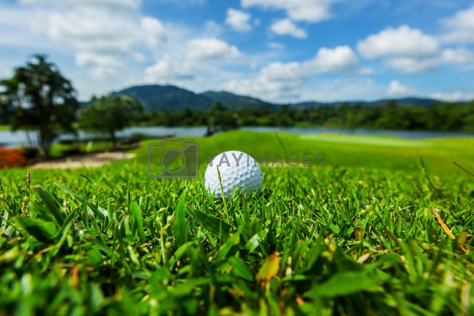Royalty free image of Golf ball on course by Yellowj