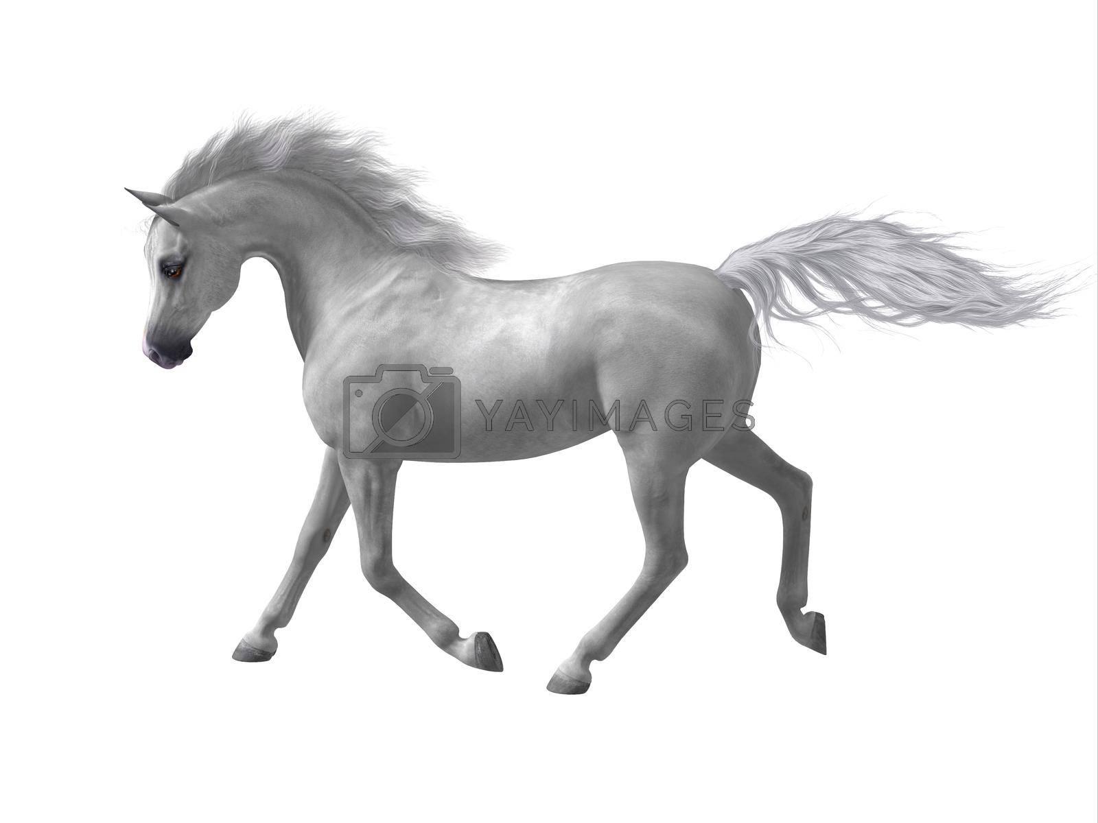 Royalty free image of Arabian Horse by Catmando