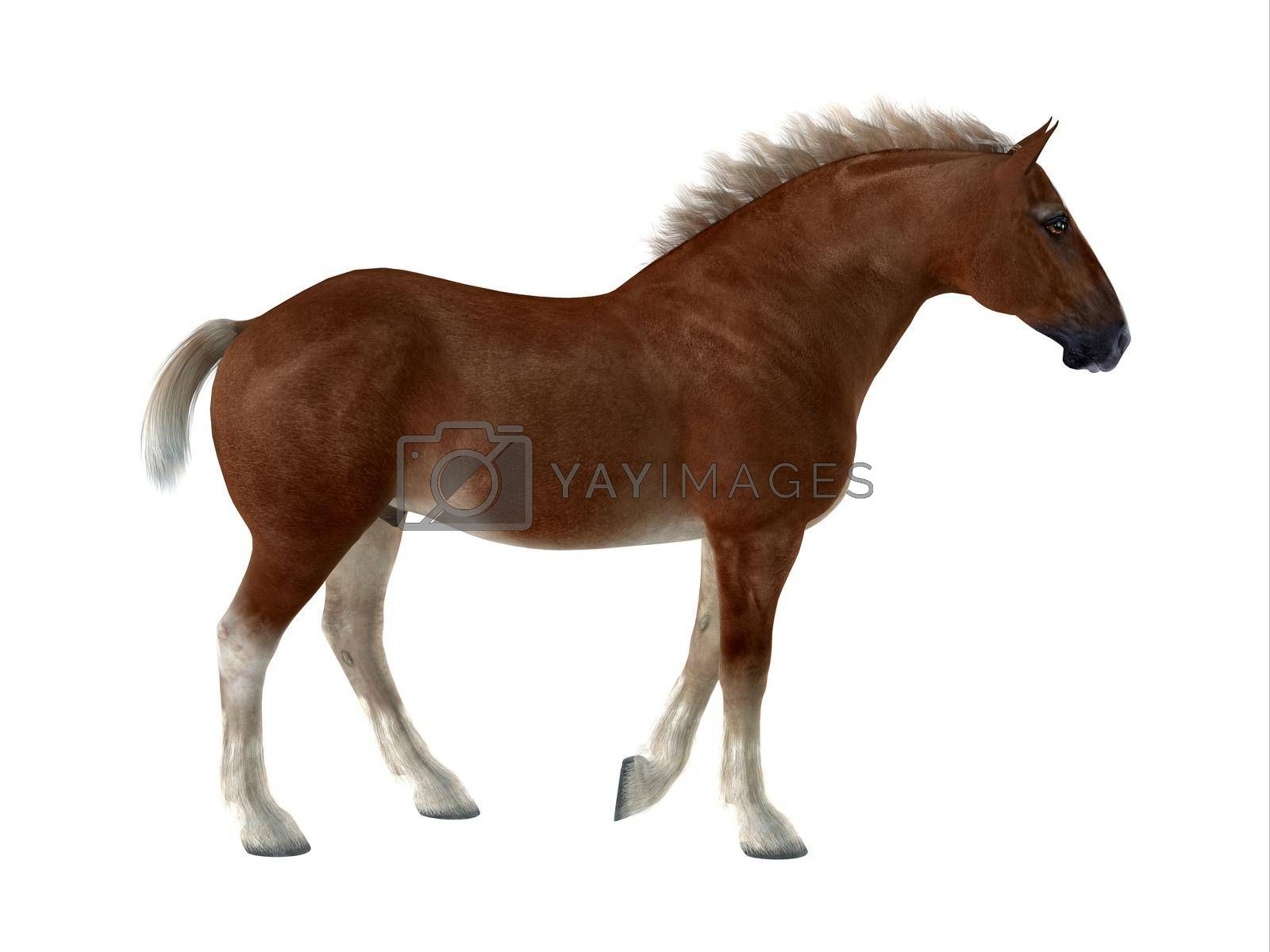 Royalty free image of Belgian Horse by Catmando