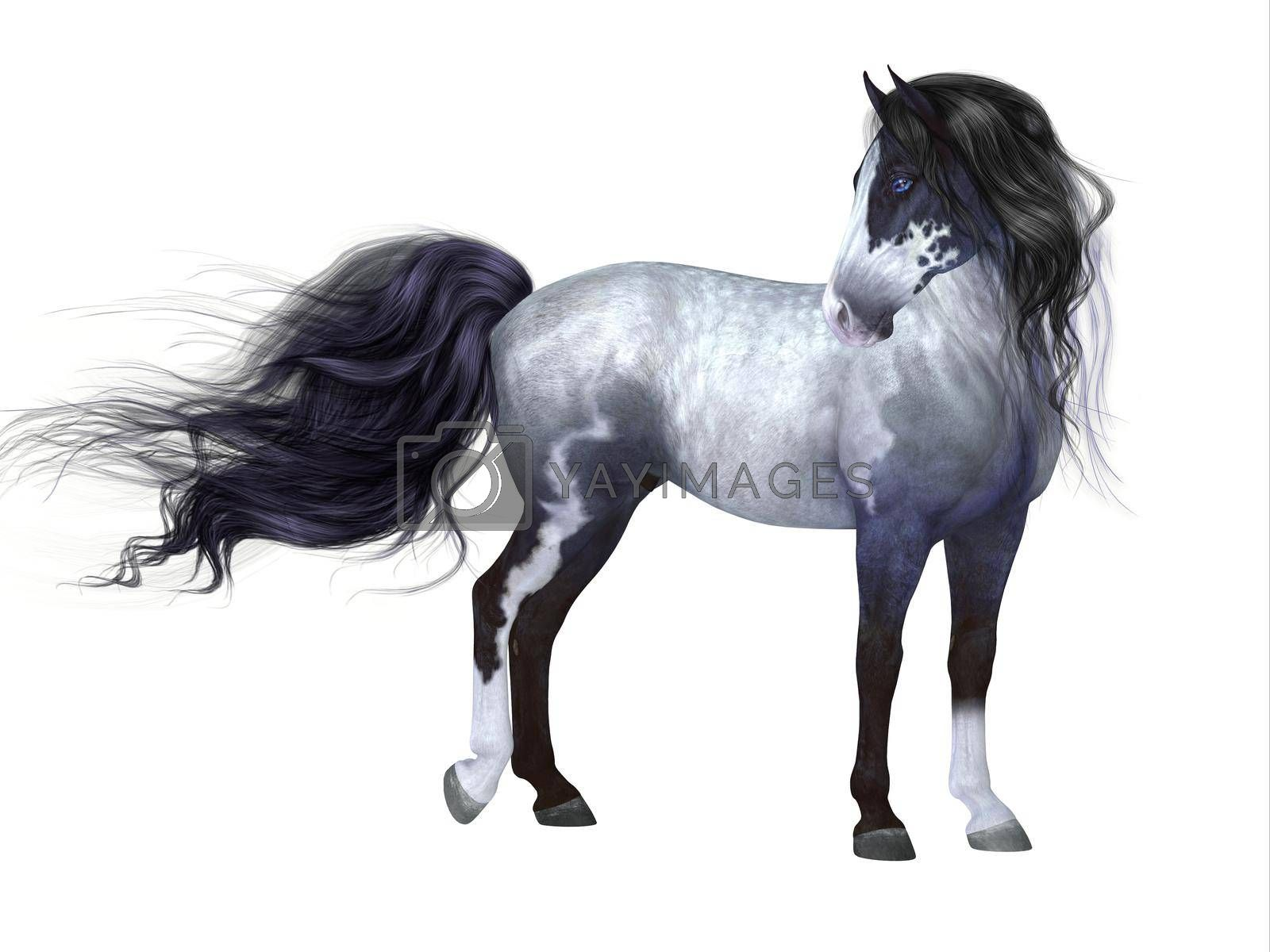 The Blue Roan is a coat color of many different breeds of horses and is distinguished by a base black color.