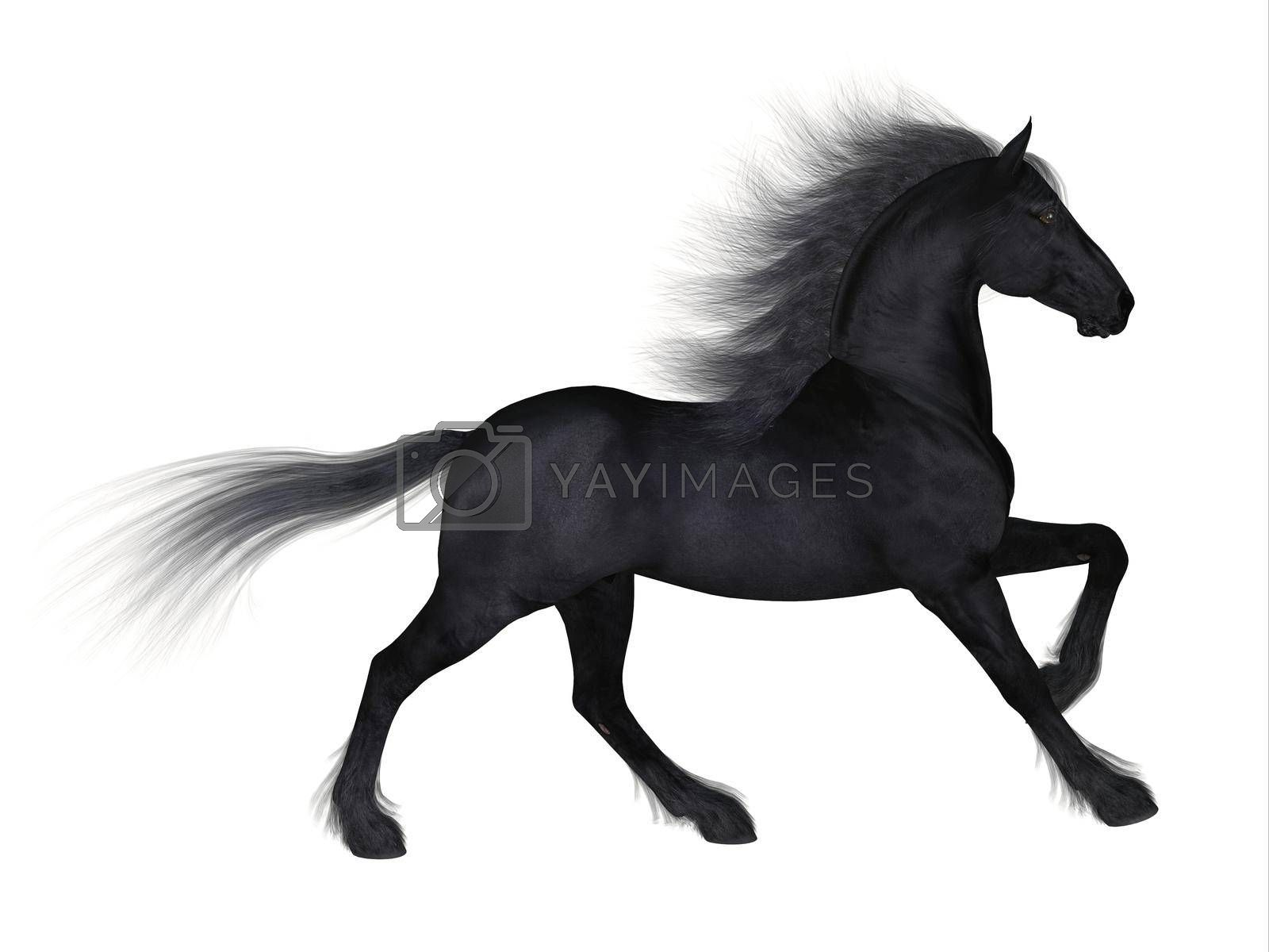 Royalty free image of Friesian Horse by Catmando
