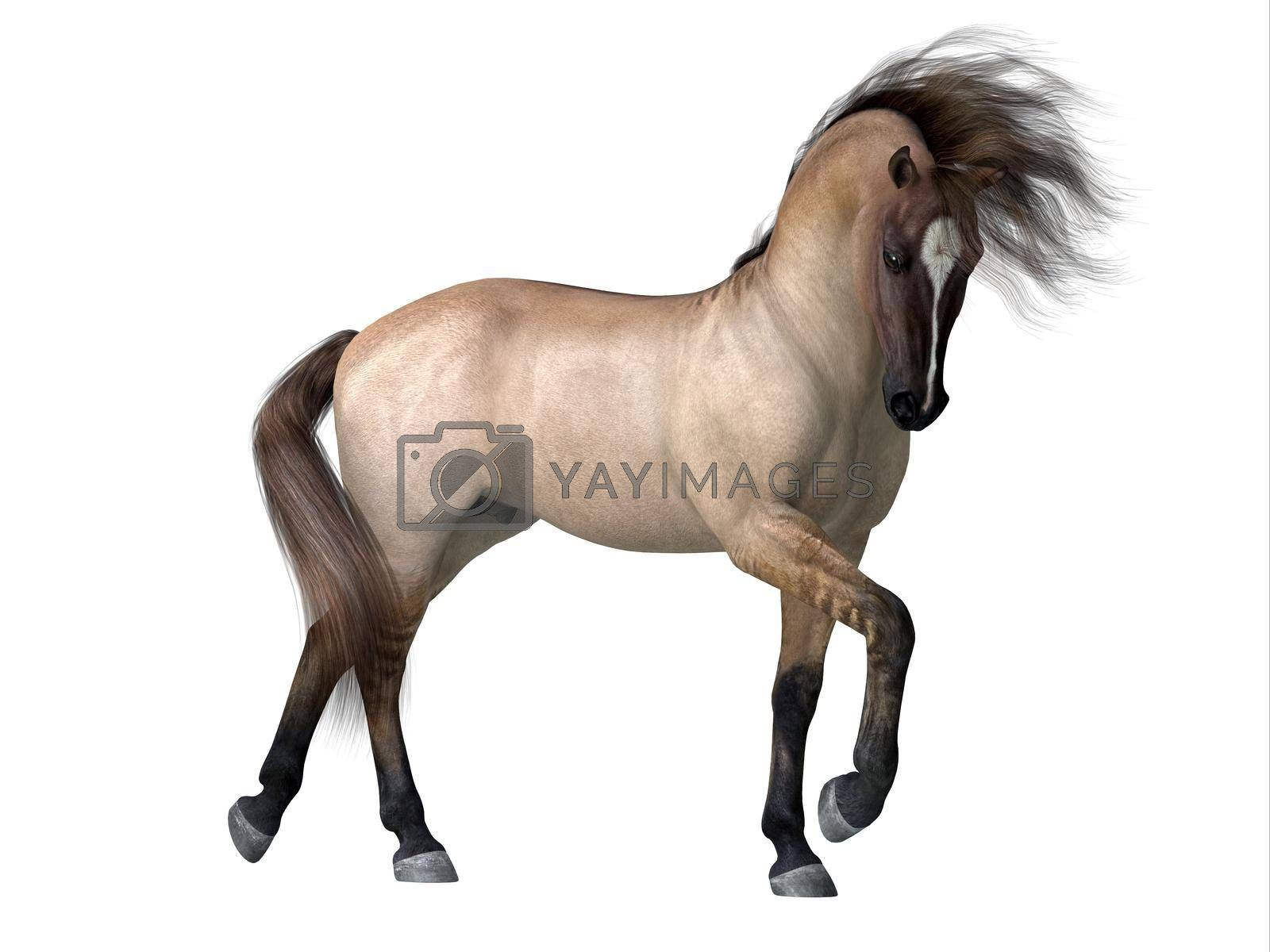 Royalty free image of Grulla Dun Horse by Catmando