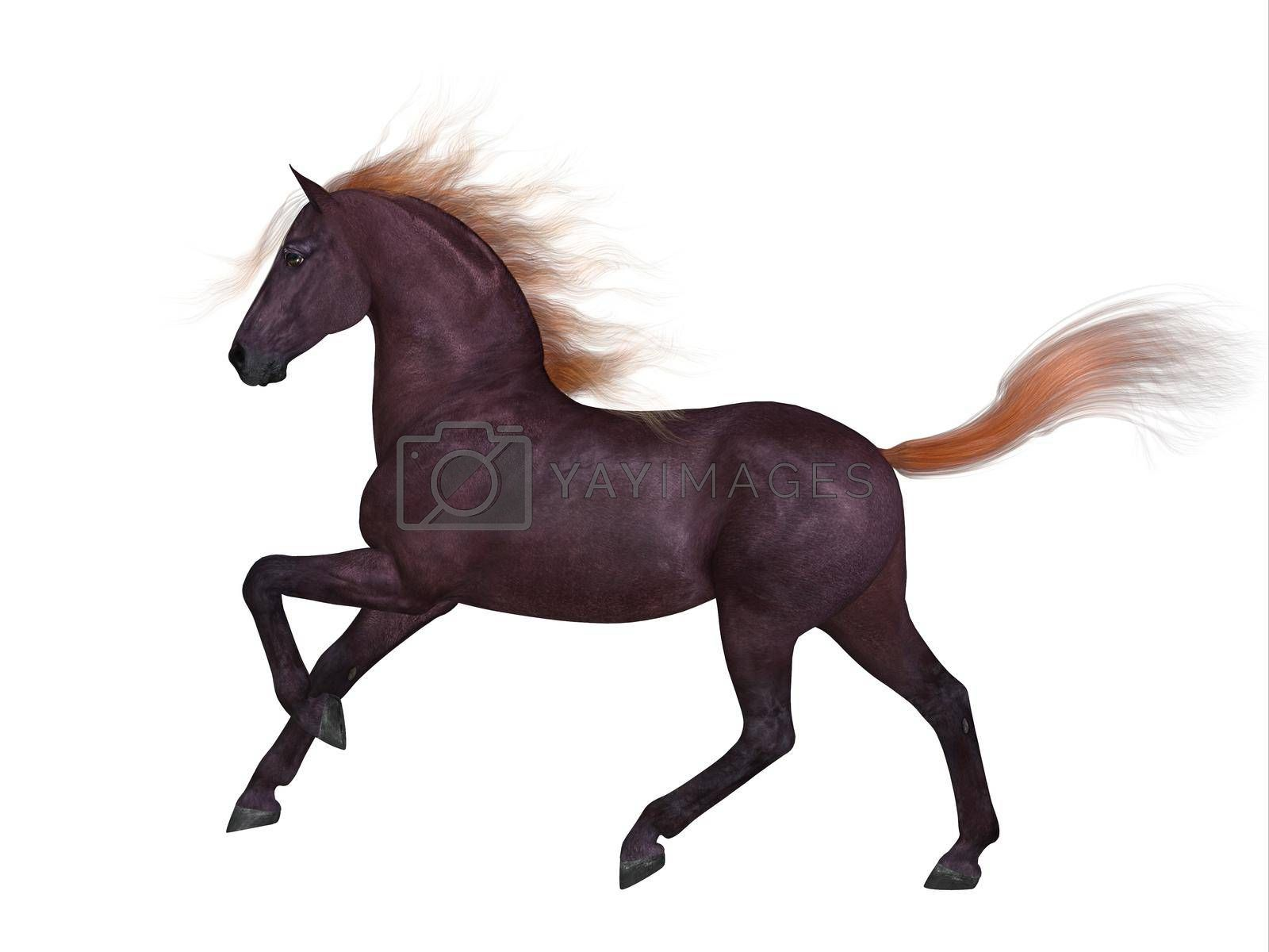 The Liver Chestnut is a coat color of many different breeds of horses and is distinguished by a lighter color in mane and tail.