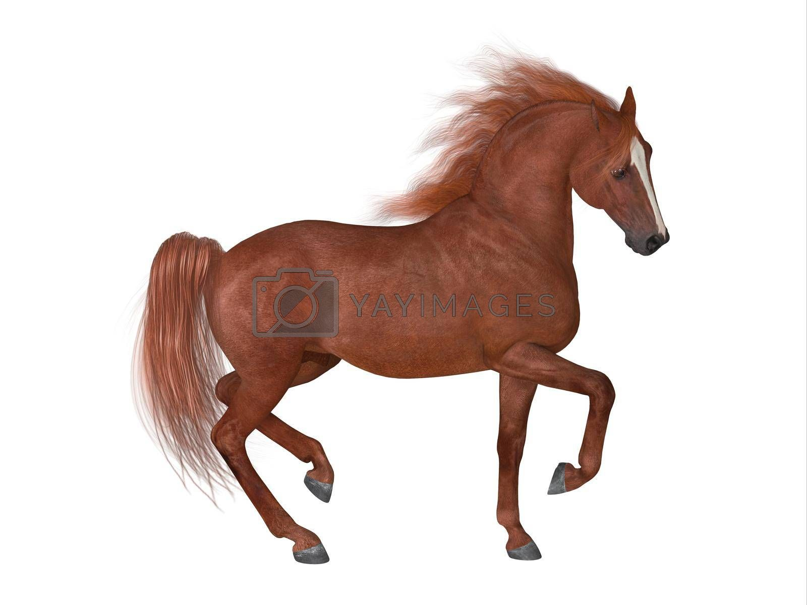 The Thoroughbred is best known for horse racing and can come in various coat colors and known for their speed, spirit and endurance.