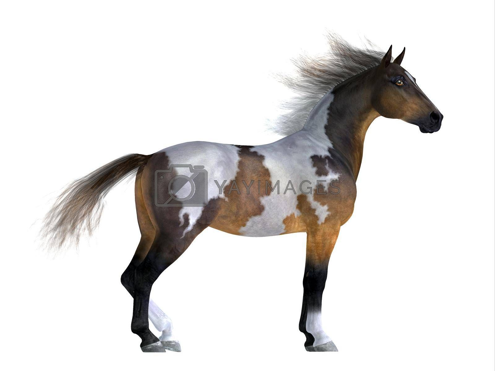 Royalty free image of Wild Mustang Stallion by Catmando