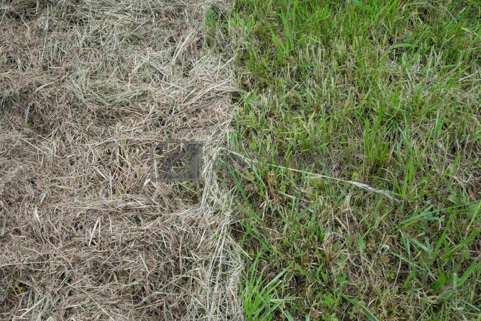 hay laying on green grass, grassland in farming and agriculture