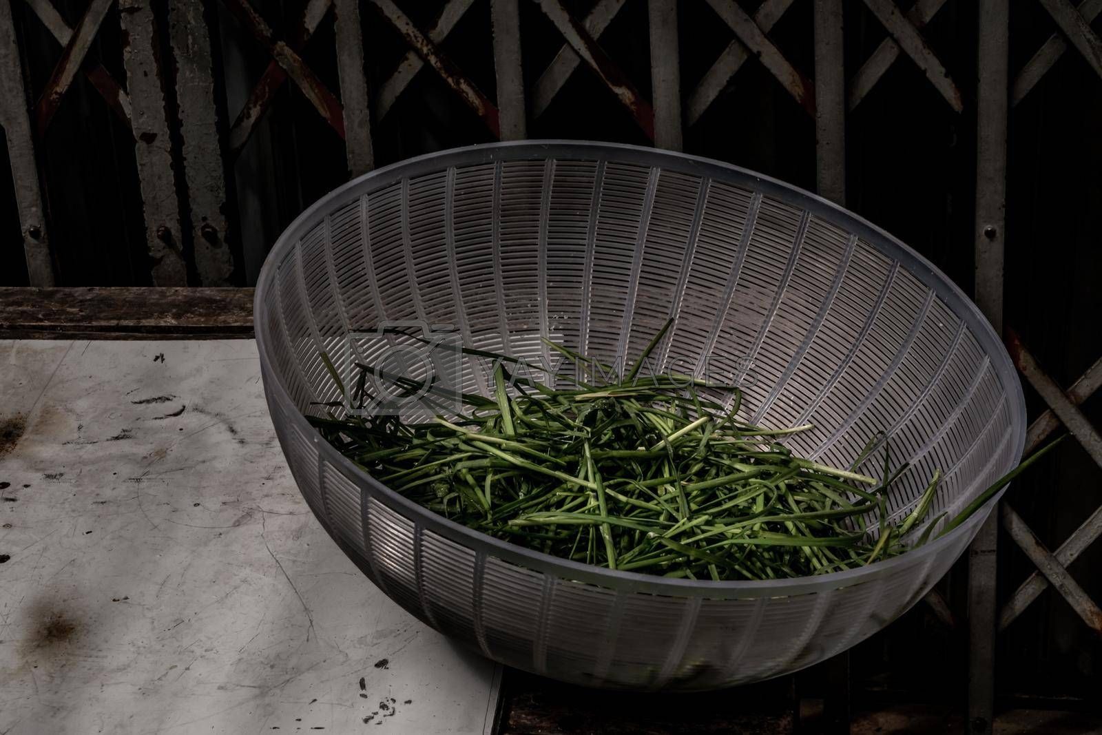 Spring onion in Dish cover on table in front of ancient iron gate. Vegetable.