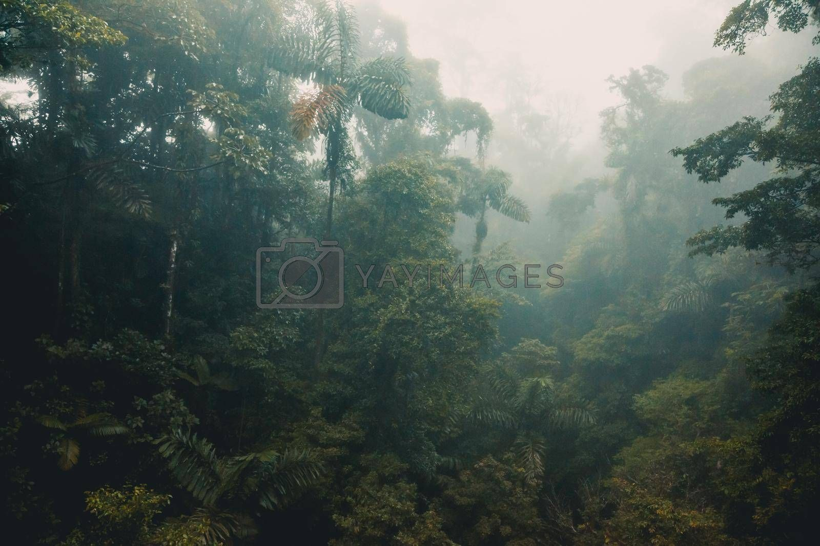 Foggy Sky in the Jungle. Tropical Forest. Morning in the Woods. Exotic Trees and Bushes. Palms are Extremely High. Costa Rica.