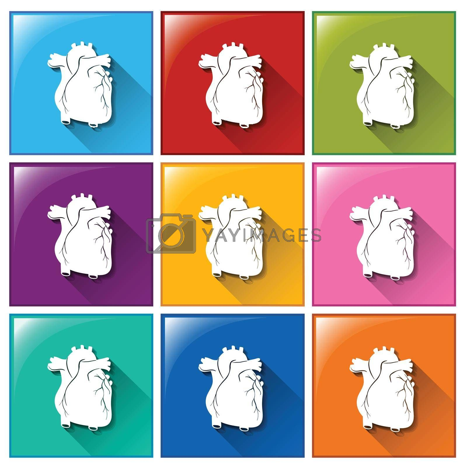 Royalty free image of Buttons with heart organs by iimages