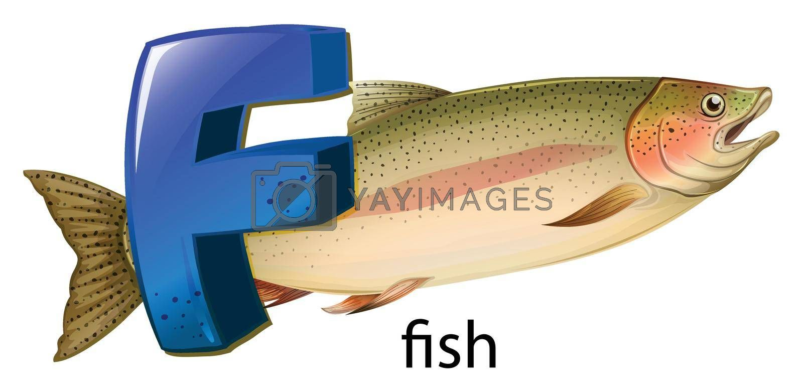 Royalty free image of A letter F for fish by iimages