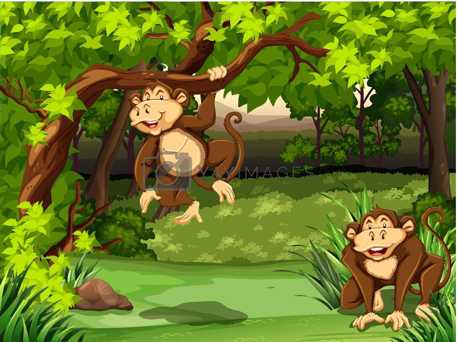 Royalty free image of Monkeys by iimages