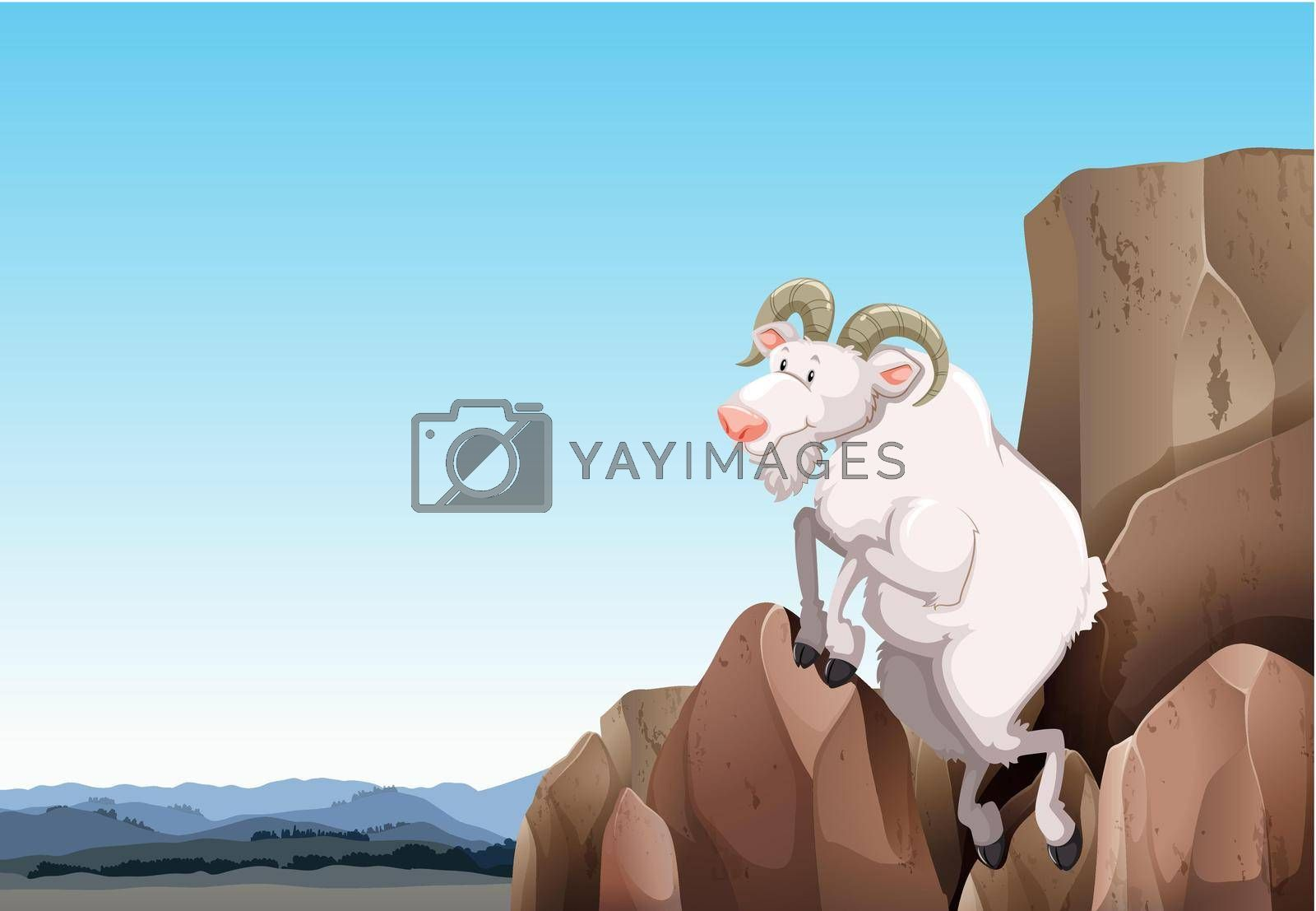 Royalty free image of White goat by iimages