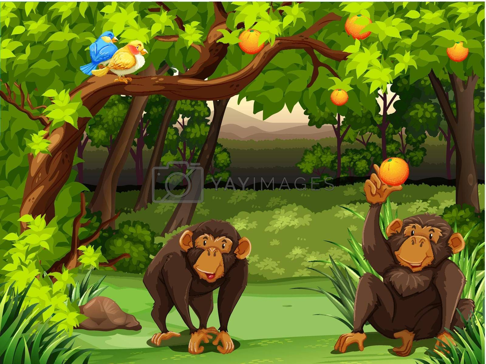 Royalty free image of Monkey by iimages