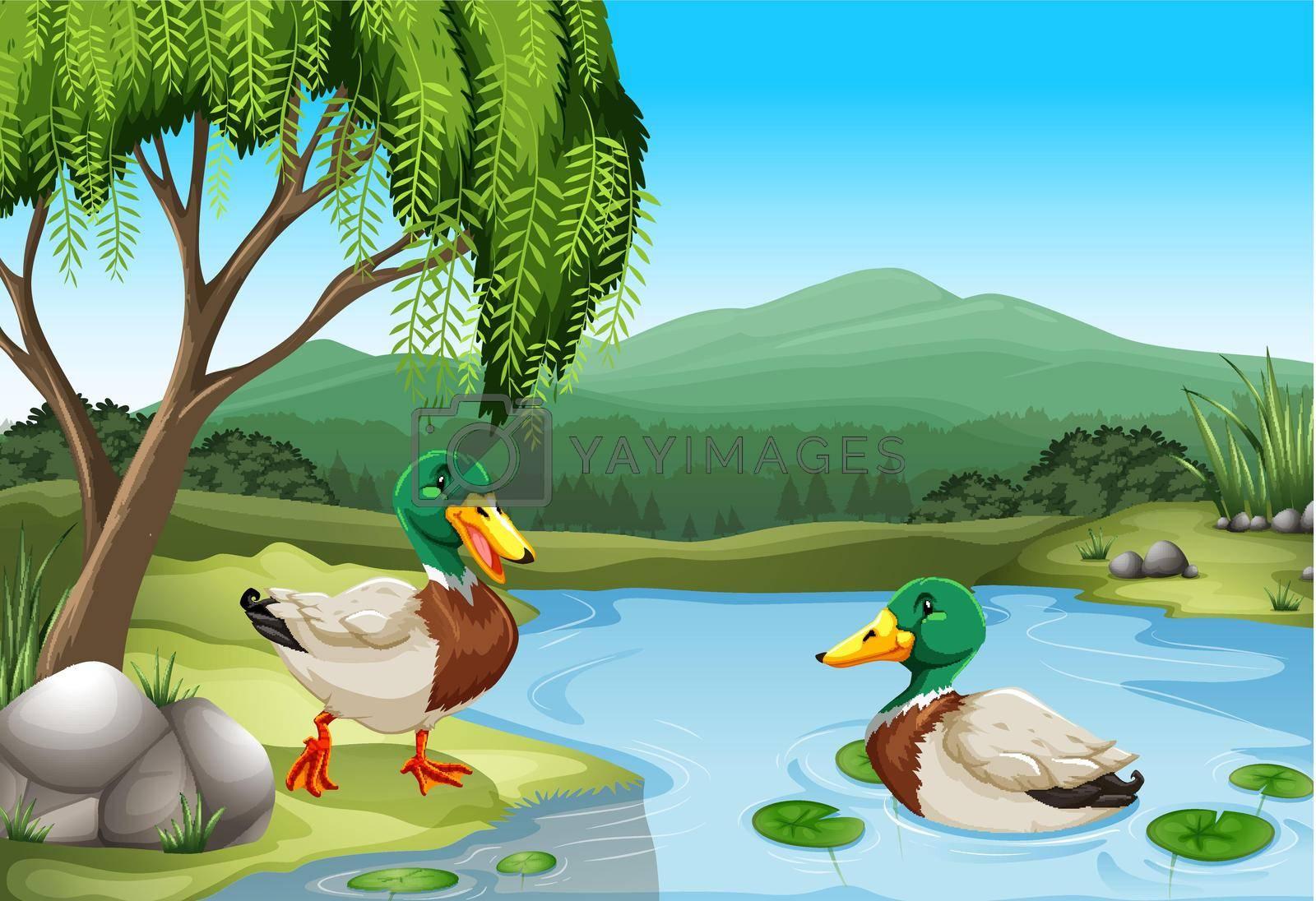 Royalty free image of Ducks by iimages