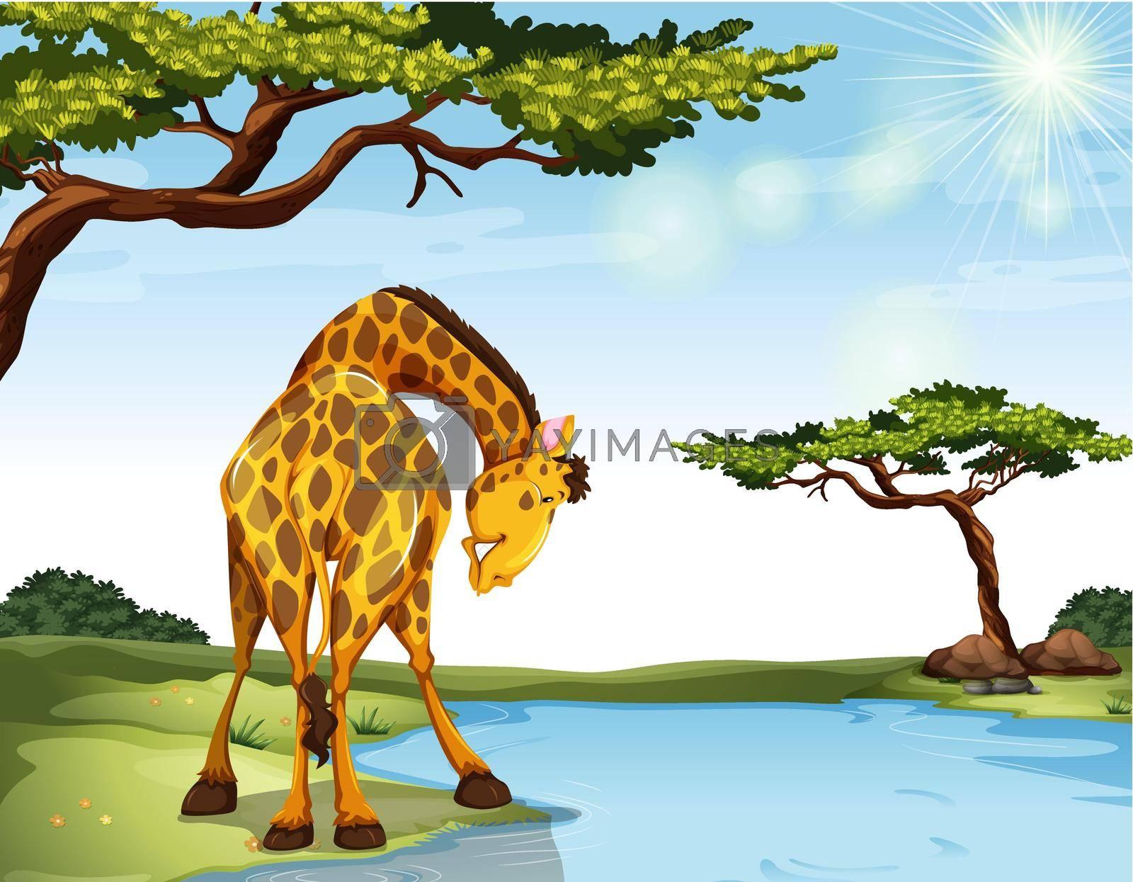 Royalty free image of Giraffe by iimages