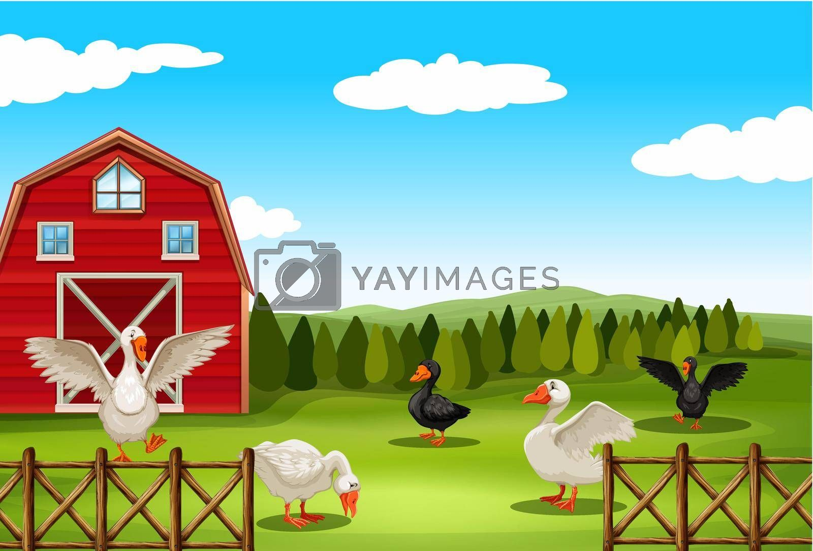 Royalty free image of Farmland by iimages