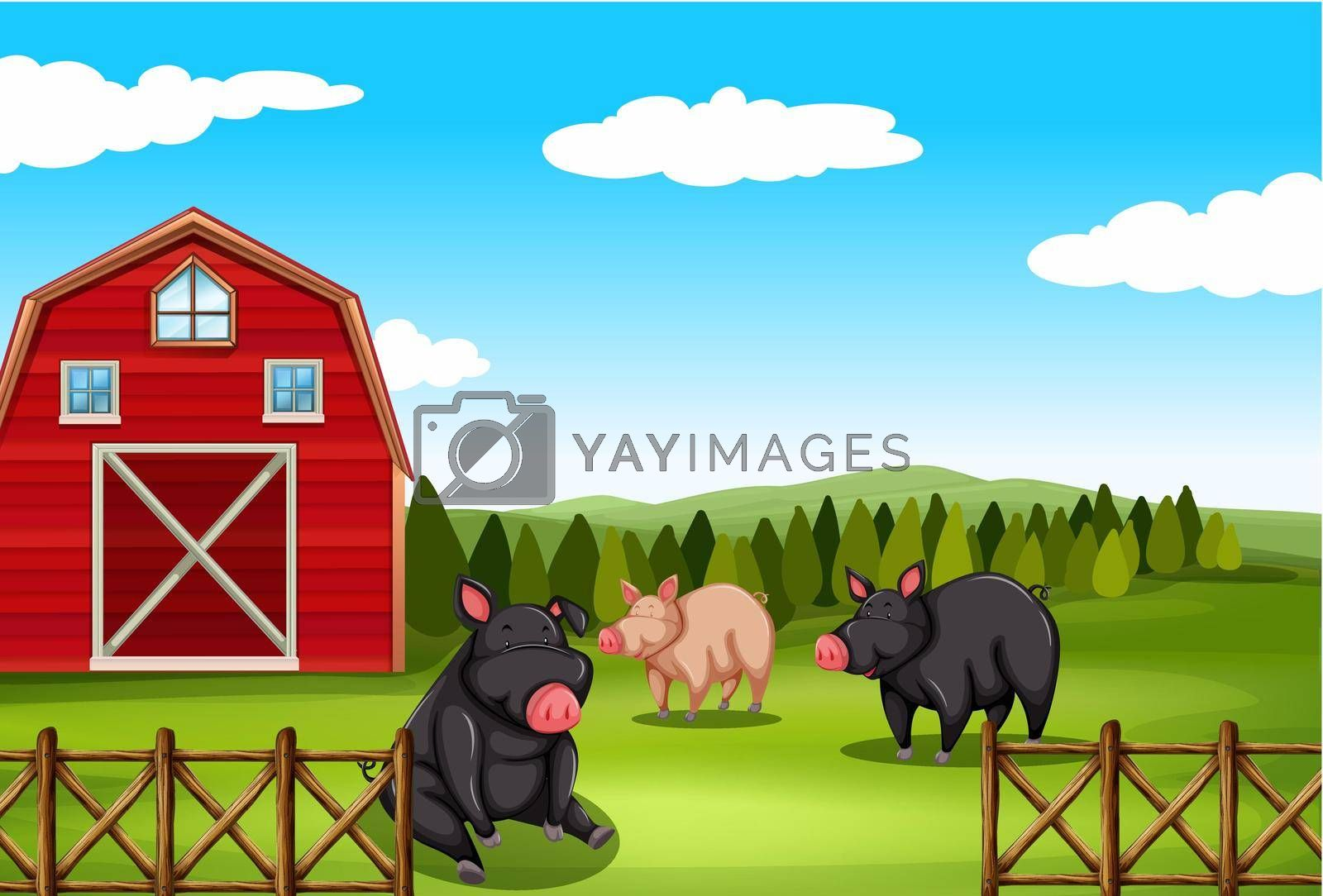 Royalty free image of Pigs in a farm by iimages