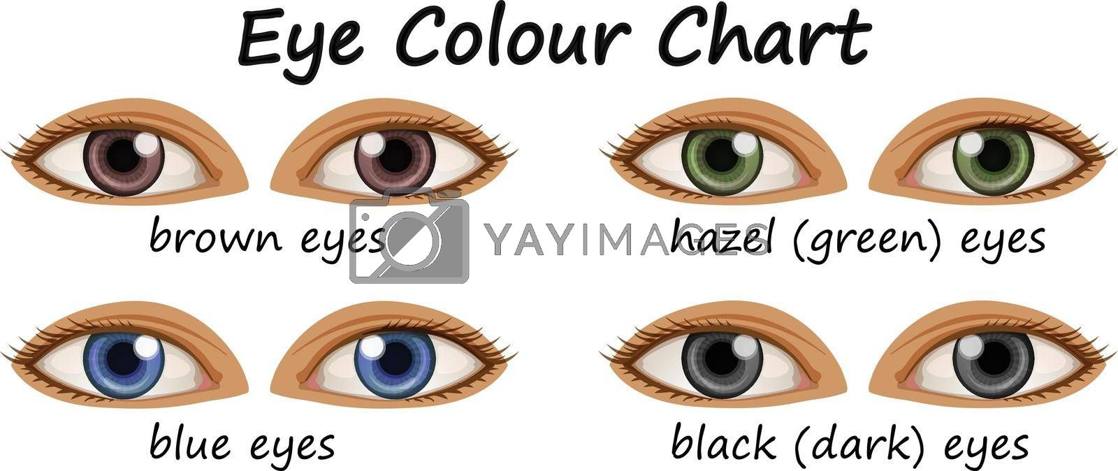 Human eyes with different colors illustration