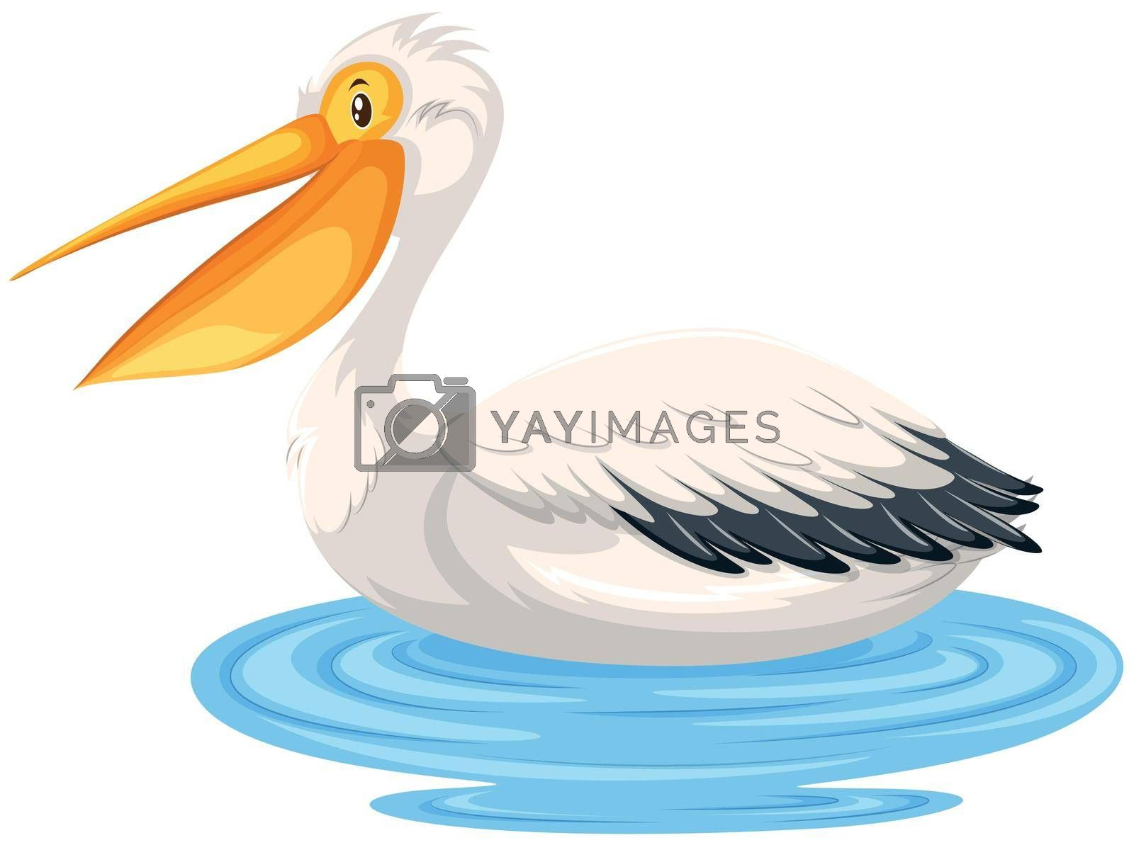 A pelican on water illustration