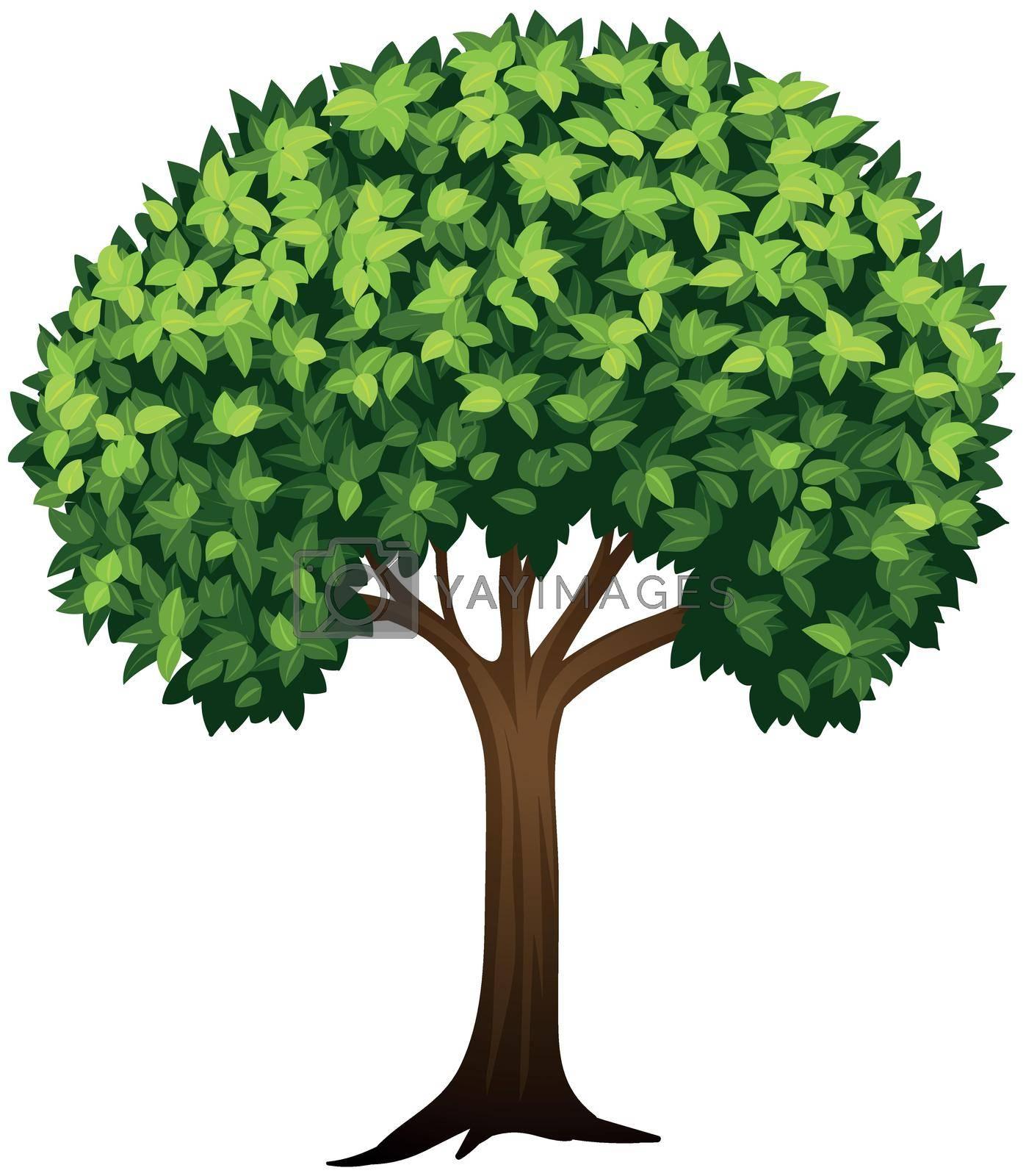 Leafy green tree white background illustration