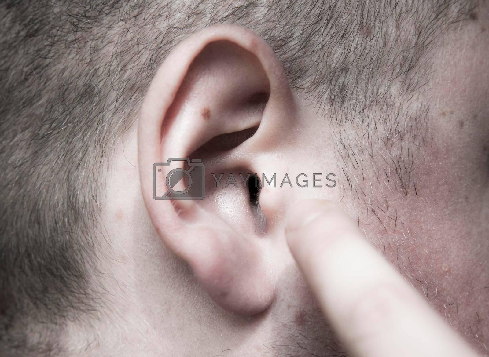 the human ear, the organ of hearing and sense of balance
