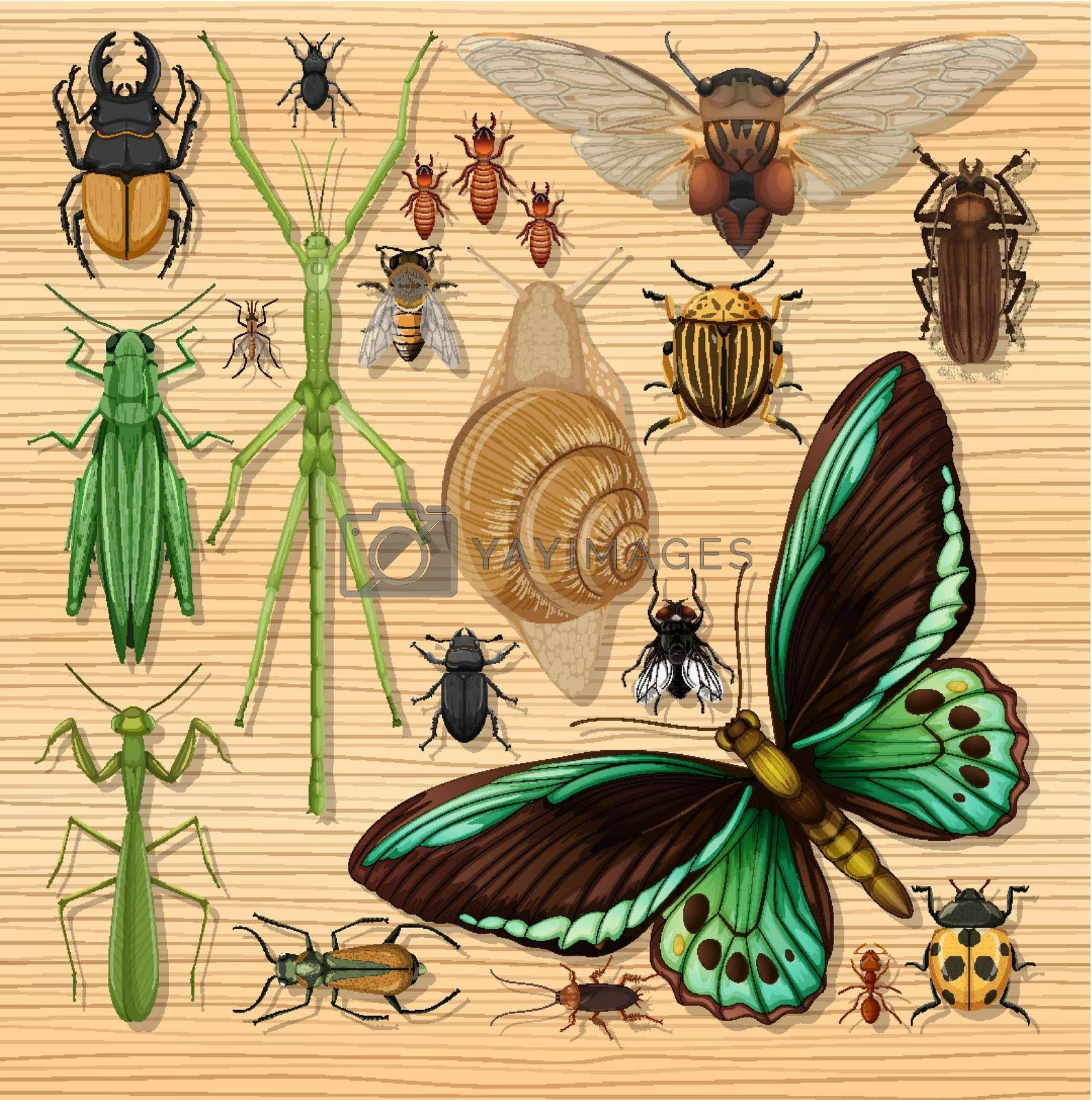 Set of different insects on wooden wallpaper background illustration