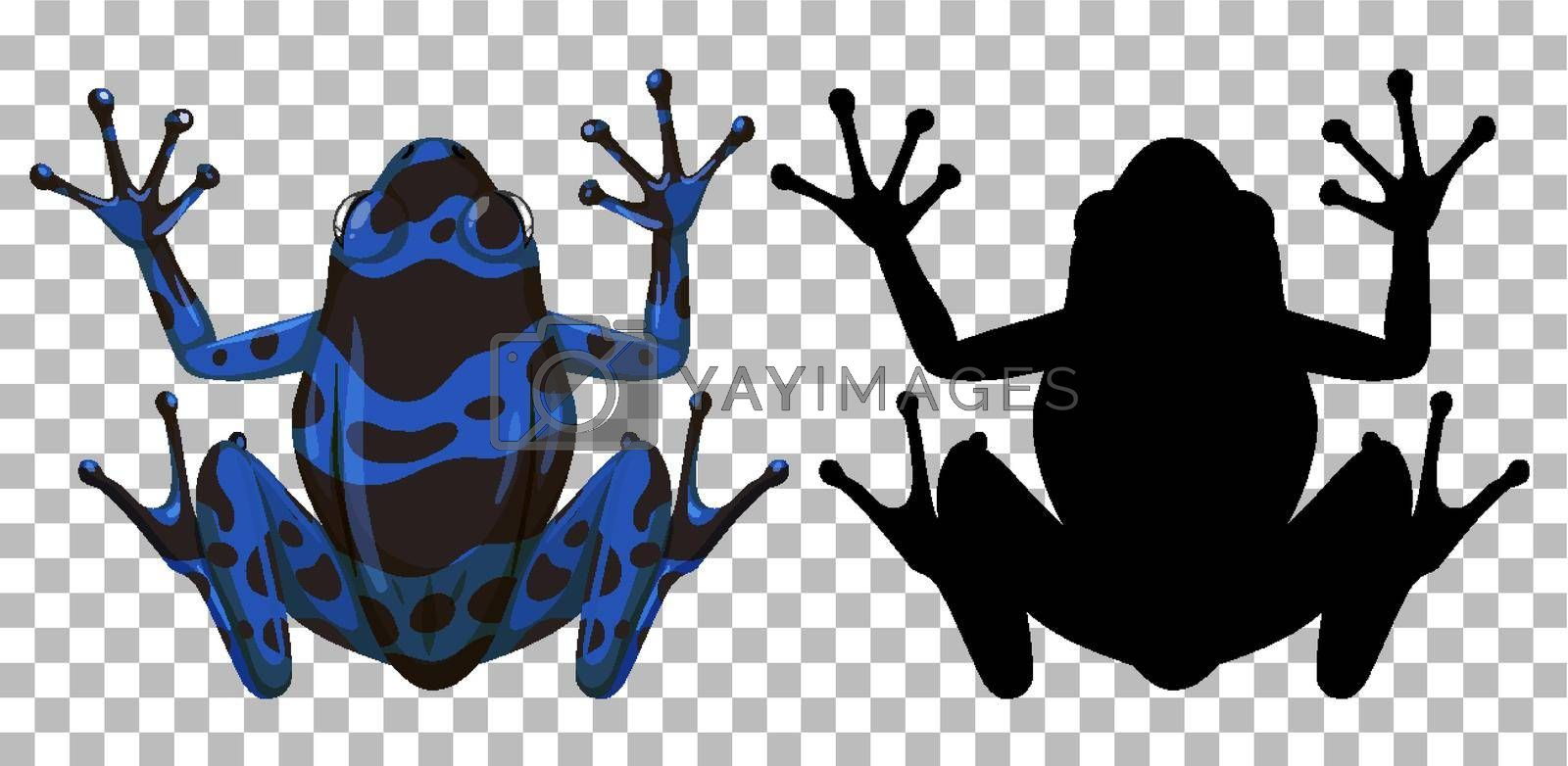 Blue poison dart frog with its silhouette on transparent background illustration