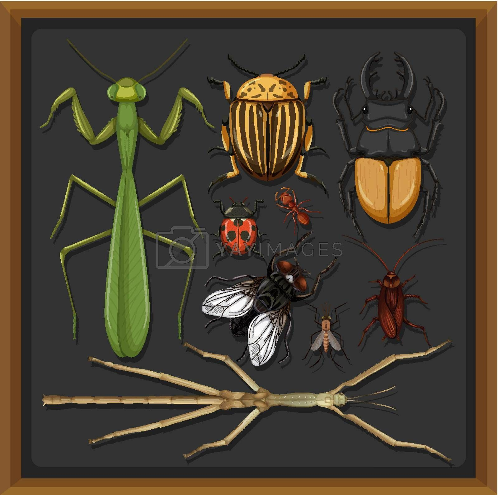 Set of different insects in wooden frame background illustration