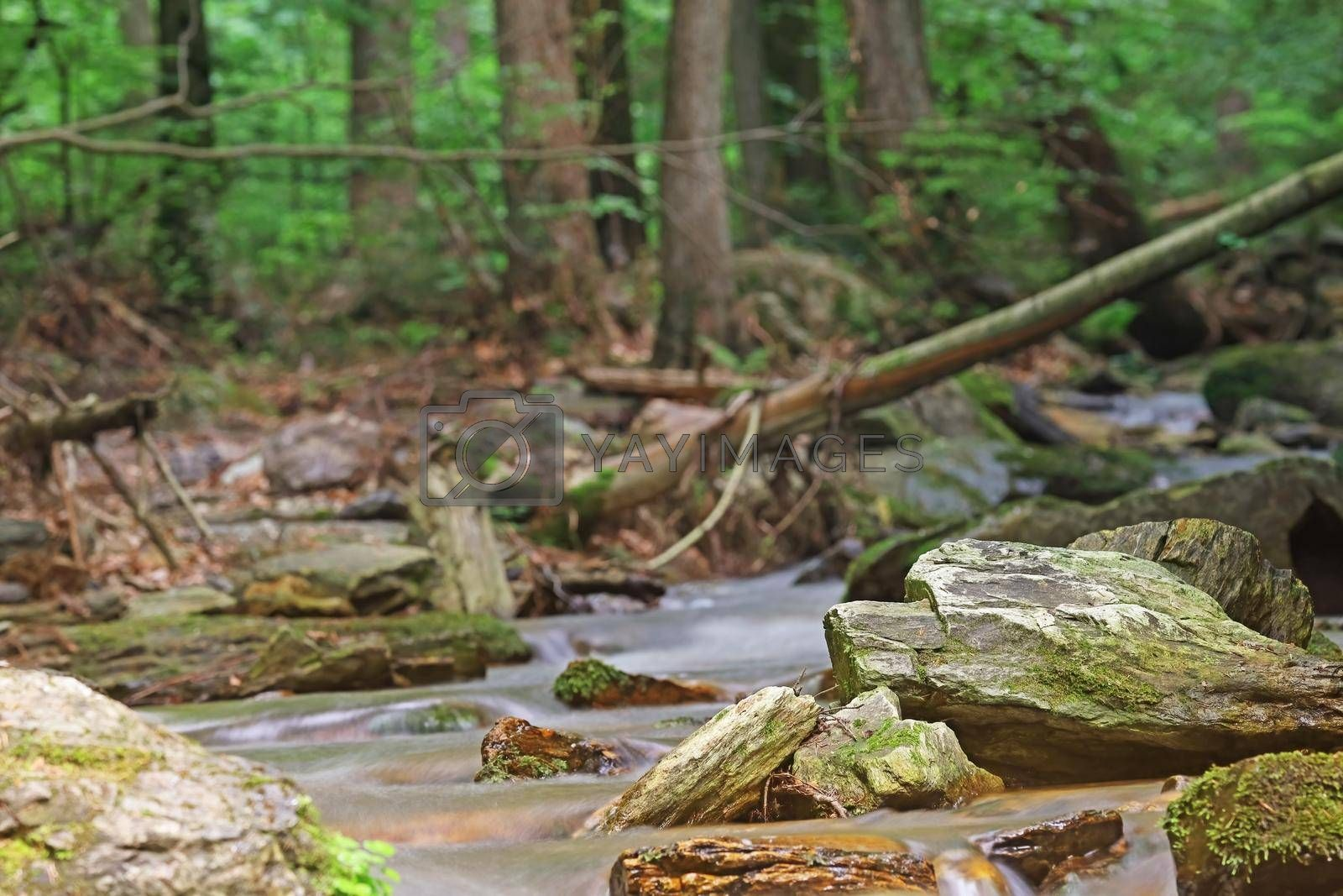 Royalty free image of Silky effect of cascades of running water in a brook by Frank11