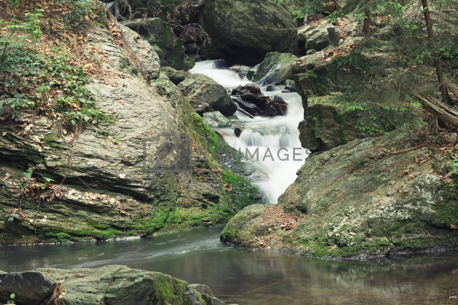 Royalty free image of Silky effect of waterfall running in a brook. by Frank11