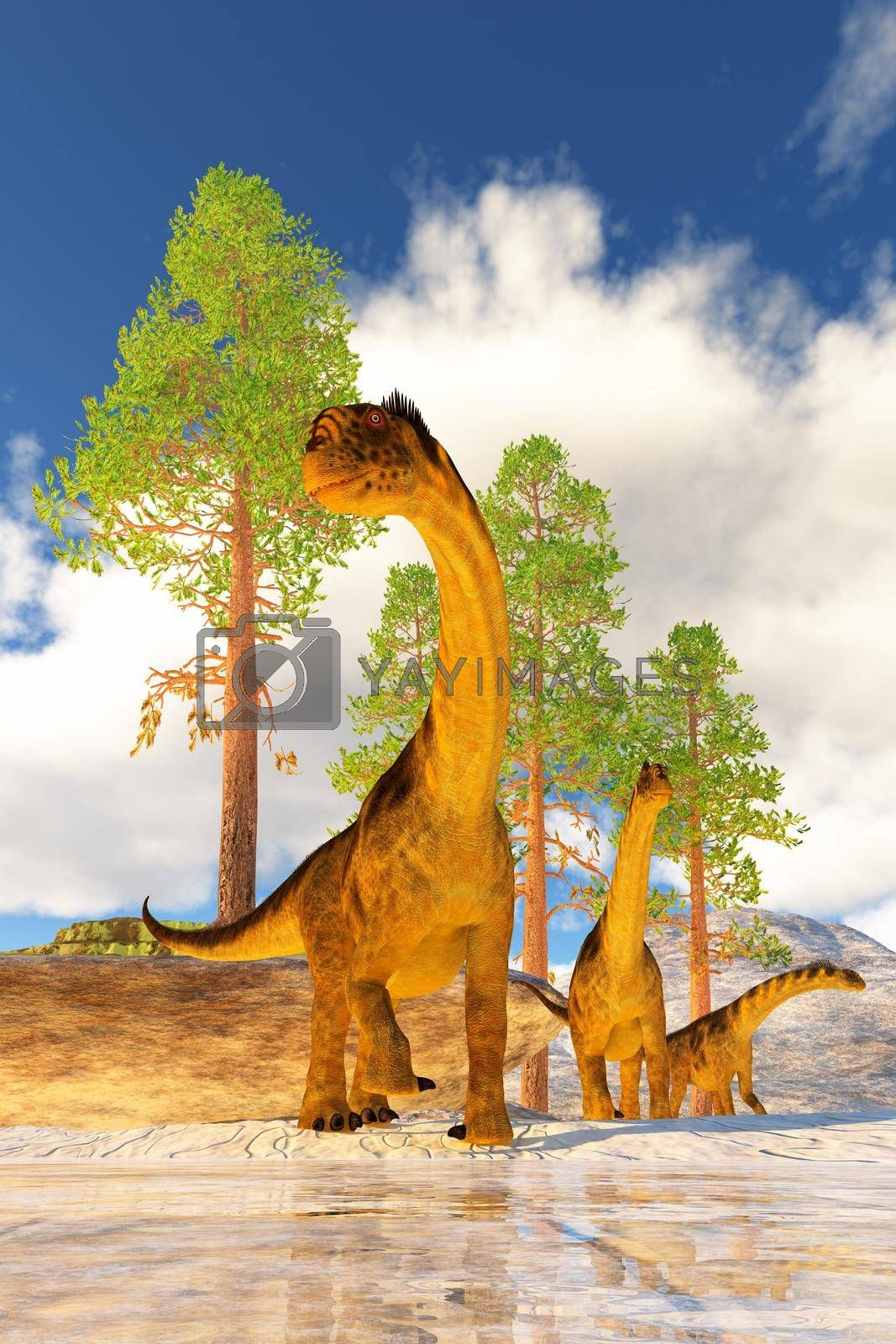 A herd of Camarasaurus dinosaurs search for vegetation to eat during the Jurassic Age of North America.