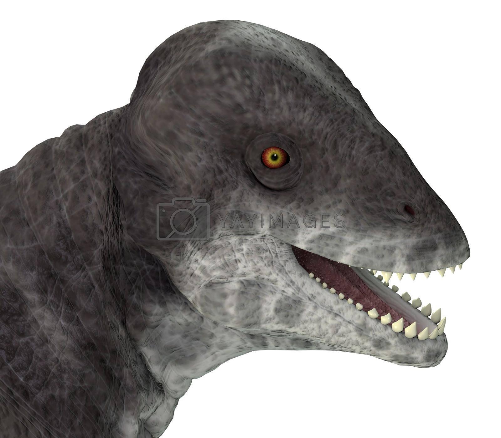 Royalty free image of Criocephalosaurus Dinosaur Head by Catmando